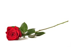 Single long stem red rose against a white background