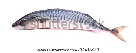 Single Mackerel Fish on a white background