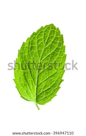 Single mint leaf isolated on white background #396947110