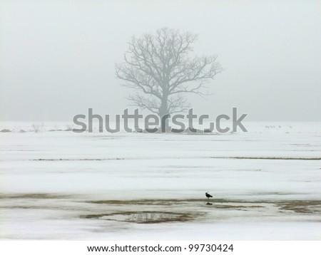 Single oak tree in winter on a foggy afternoon