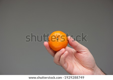 Single of fresh raw mandarin clementine held in hand by Caucasian male isolated on gray background studio shot. ストックフォト ©
