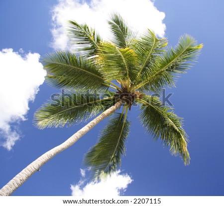Single palm against the sky