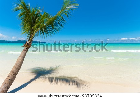 single palm tree hanging over a white beach with clear blue water