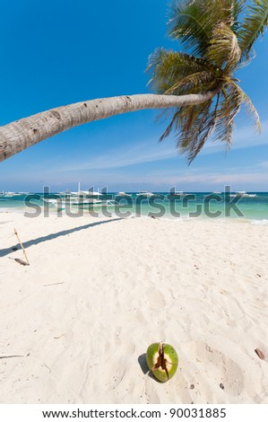 single palm tree over a white sand beach on Bohol, Philippines