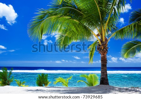 Single palm tree overlooking amazing blue lagoon