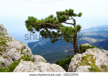 Single pine on top of rock against coast.