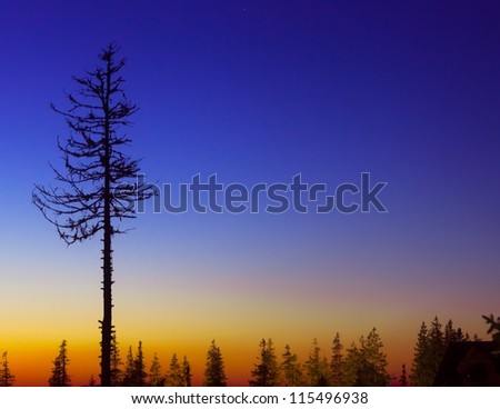 Single pine tree against colorful sunset