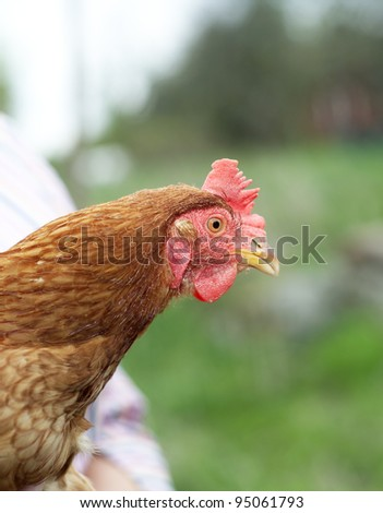 Single Poultry with selective Focus