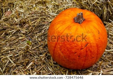 Single Pumpkin on Haystack Farm Decoration Autumn Fall Seasonal Orange Fresh Halloween #728475646
