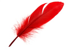 Single red feather isolated on white background