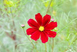 single red flower with a green background
