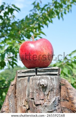 Single red ripe apple on a cut tree, on a sunny summer day. Concept of target, nature, environment, clean/healthy eating.