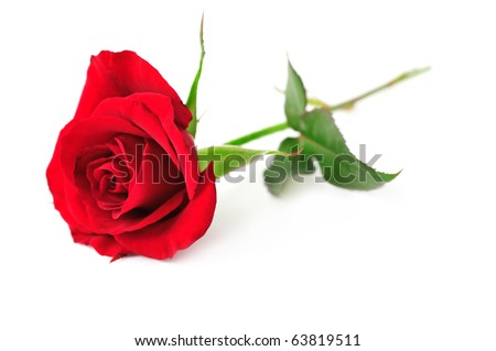 stock photo : Single red rose flower isolated on white background