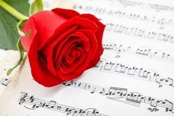 Single red rose flower on musical sheet