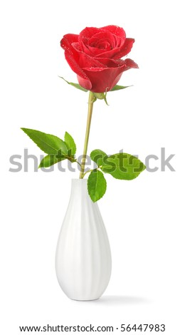 Single red rose in a vase isolated on white