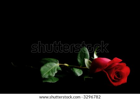 Single Red Rose on a dark place.