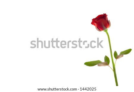 Single rose and room to write
