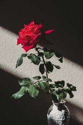 Single rose in a vintage vase. High contrasting lighting and romantic mood.