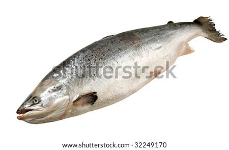 singles white salmon