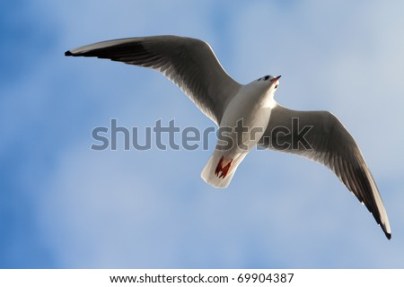 Single sea gull flying against background of blue sky (möwe)