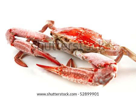 single sear orange crab over white background