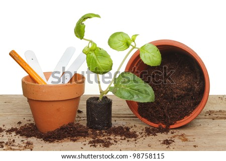 Single seedling plug plant with labels and pots on a wooden bench