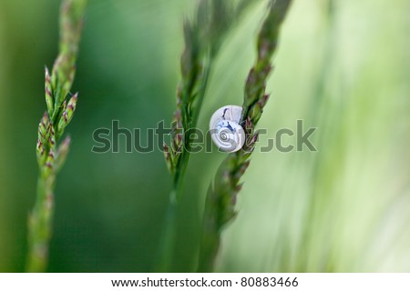 Single Snail on Grass Blade in Spring Meadow - stock photo