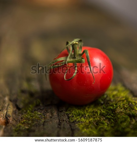single tomato on a wooden background with moss Zdjęcia stock ©