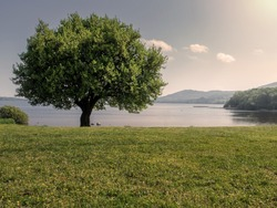 Single tree by a lake, Warm sunny day, cloudy sky, Lough Derg, county Tipperary, Ireland.