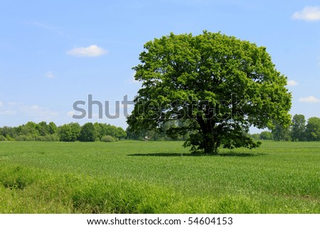 single tree field cloudy sky - stock photo