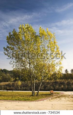 Single tree in a park.