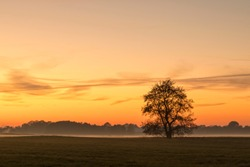 Single tree in rural landscape of Lower Saxony, Germany, at sunset