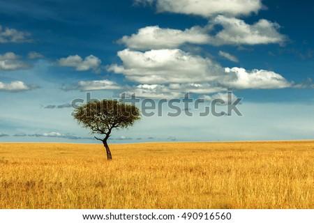 Single tree in savanna with blue sky