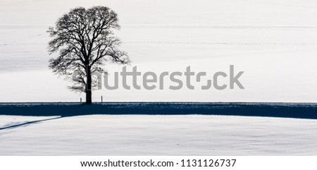 Stock Photo Single tree in snow next to left to right road