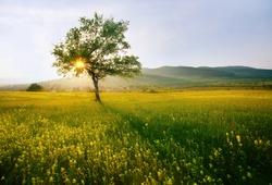 single tree in sunny farmland near village; hdr sunset landscape