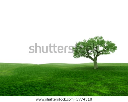 single tree in the field on a white background in a summer season