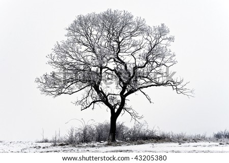 Single tree in the snowy landscape.