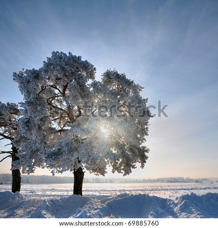 Single tree in winter weather at sunset