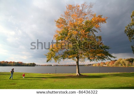 Single tree next to lake with people running nearby