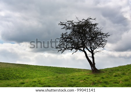 Single tree on a green meadow against a sky with clouds - stock photo