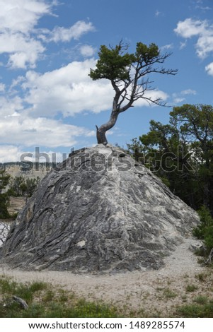 single tree on a single rock