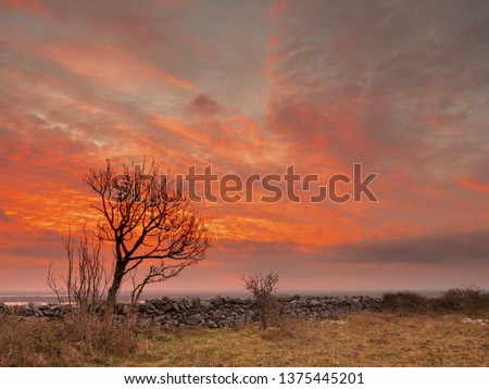 Single tree silhoette on a red morning sun rise sky. Dry stone wall, Ireland. #1375445201