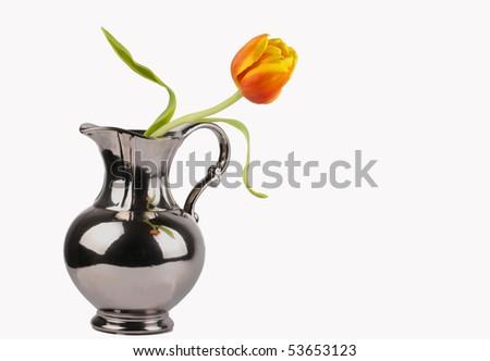 Single Tulip in Vase