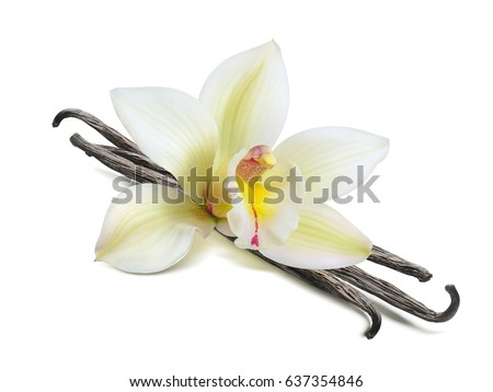 Single vanilla flower pods isolated on white background as package design element
