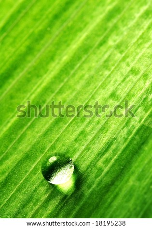 single water-drop on green plant