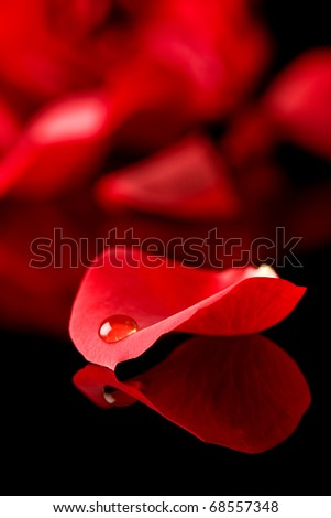 Stock Photo Single water droplet lying on a perfect rose petal