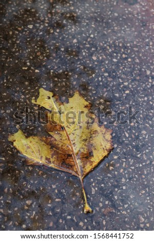 Single wet leaf on wet pavement #1568441752