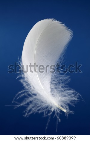 Single white bird feather over a dark blue background