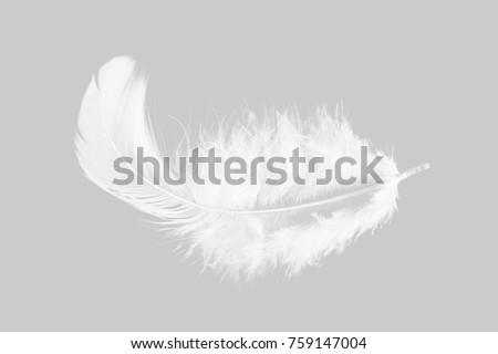 Single white feather isolated on grey background. #759147004