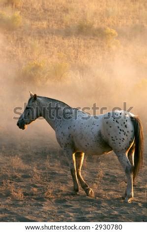 Single White Horse